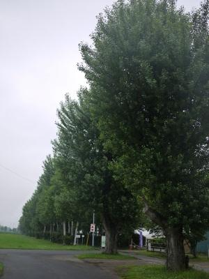 P1100140 (300x400).jpg